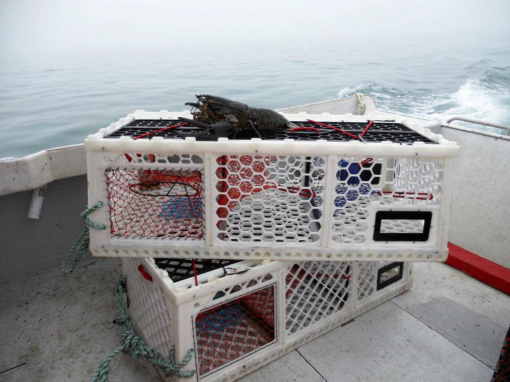 how to catch lobster with a trap